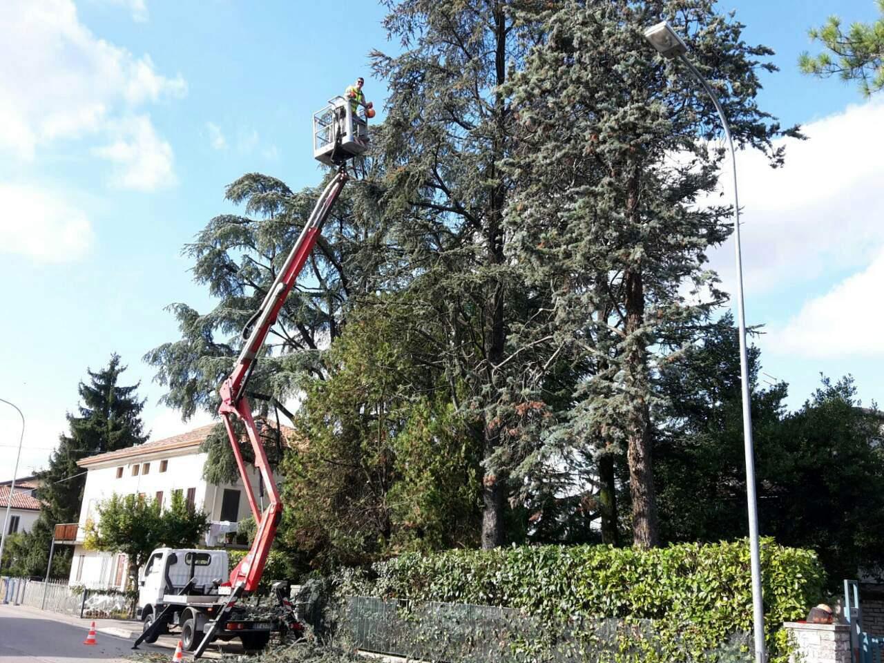 Abbattimento alberi potatura siepi trifolium giardini for Piante secche ornamentali